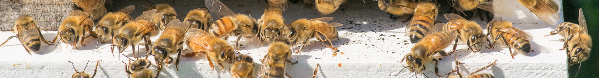 bees on bee hive header