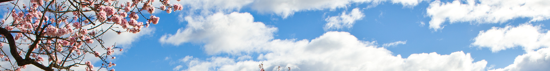 clouds and almond blossoms header