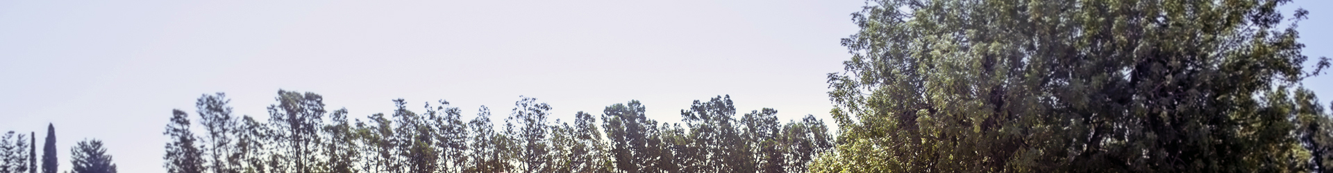 tree tops header