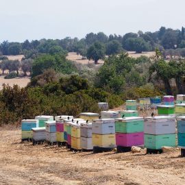 Bee hives in Cyprus summer sun